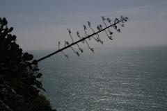 012 Fiore di Agave